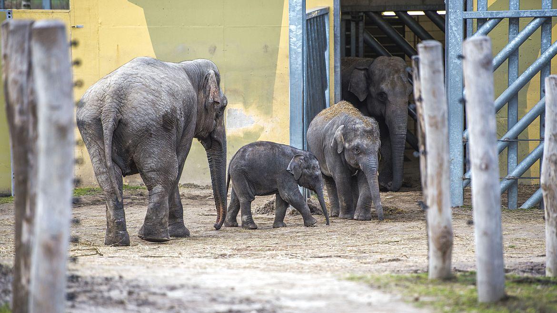 Olifantengroep haalt frisse slurf